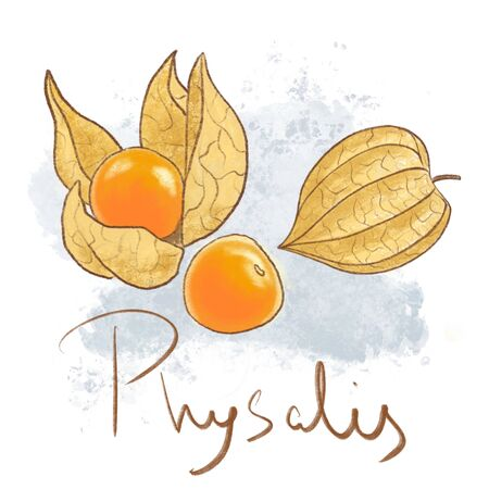 Ripe orange physalis, leaf isolated. Fresh golden fruit icon whole and peeled. Delisious food, vitamin Banque d'images
