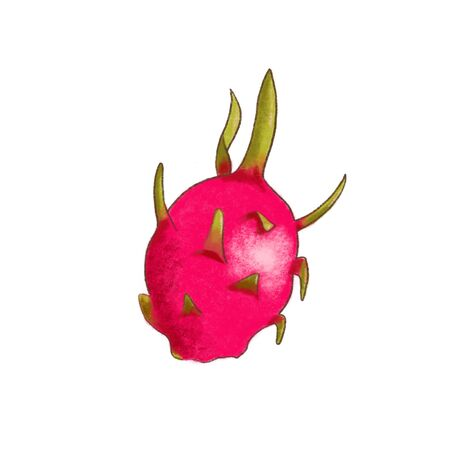Fresh juicy dragon fruit. Ripe tasty tropic exotic pitahya. Whole and halved. Delisious food, vitamins, healthe lifestyle. hand-drawn vintage style. for cooking, desserts, labels