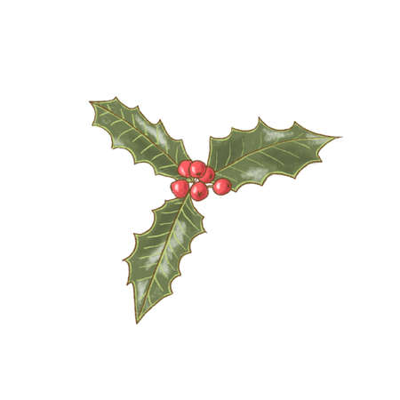 Holly berry icon. winterberry. Christmas symbol illustration Decorative plant. Banque d'images
