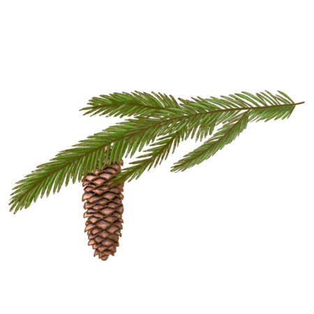 pine branch and cone, fir twig with cone, cedar pine hand drawn illustration. hand drawn