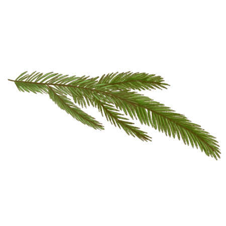 pine branch, green needles, fir twig, cedar offshoot. hand drawn illustration for prints, posters
