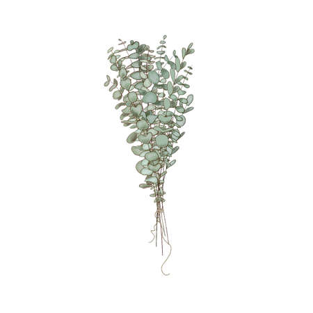 Eucalyptus branches bouquet , copy space Watercolor like composition Herbs for cards