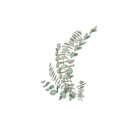 Eucalyptus decoration, copy space Watercolor like composition Herbs for cards, wedding invitation,