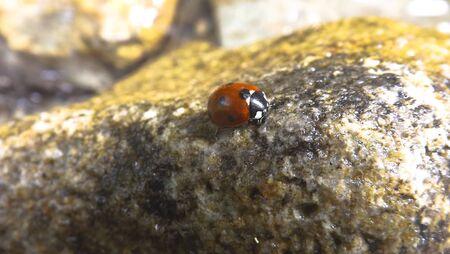 Beatiful ladybug Stock Photo