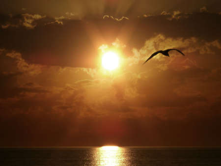 eagle wing: Silhouette of flying bird on sea sunset.