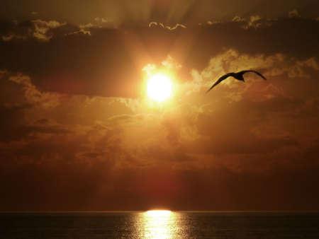 aguila real: Silueta de vuelo de aves de puesta de sol sobre el mar.