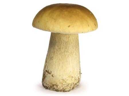 Big mushroom isolated on white background.