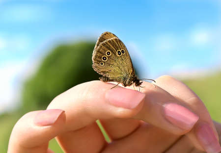 Mariposa con diseño en las alas de las rondas que se sientan en la mano Mujer dedos con el cielo y la naturaleza aldea en el fondo