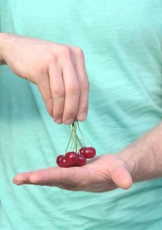 Cherry Berries in Man Hands natural organic fresh product Stock Photo - 20379055
