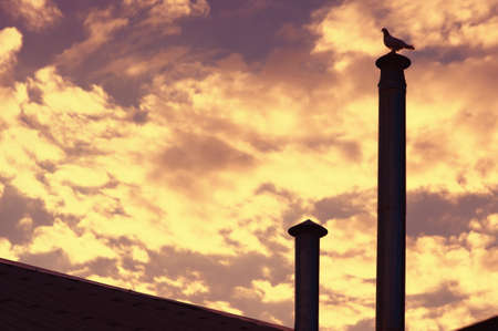Background of Sky on Sunset with Pigeon Bird silhouette sitting on roof chimney-stack