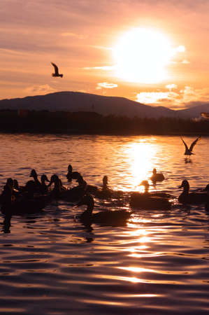Sunset on lake with silhouette of Birds and Mountains colorful Landscape photo