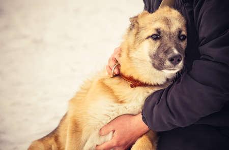 Perro de perrito del pastor y la mujer abrazando vida al aire libre y el concepto de la amistad Foto de archivo