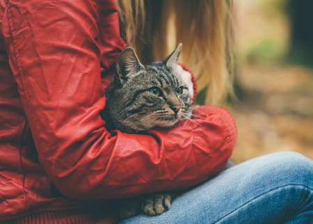 Gray Cat homeless and Woman hugging Outdoor Lifestyle and Friendship helping concept Standard-Bild