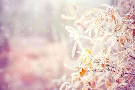 Fondo del invierno con las hojas de las ramas de los árboles de la nieve y copos de nieve en el fondo de la tarjeta de felicitación del día de fiesta Foto de archivo