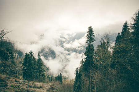 cloudy moody: Coniferous Forest with cloudy Mountains Caucasus beautiful landscape moody weather colors