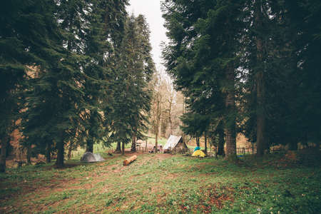 Coniferous Forest with camping Landscape moody weather colors