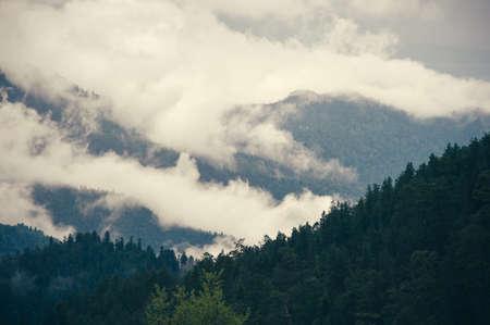 Nadelwald Mit Bewölktem Berge Kaukasus Schöne Landschaft Launisch ...