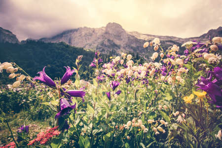 fisht: Blooming flowers valley with rocky Fisht Mountains Landscape Summer Travel scenic view  moody cloudy sky
