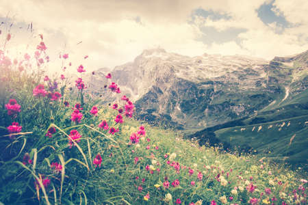 fisht: Rocky Fisht Mountains and green alpine valley with blooming pink flowers Landscape Summer Travel scenic view Stock Photo