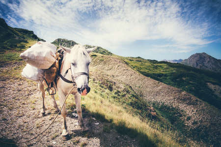pack animal: White Horse pack Animal with mountains and clouds landscape on background Stock Photo