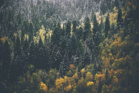 epic: Autumn Coniferous Forest Landscape aerial view background Travel serene scenic view moody weather