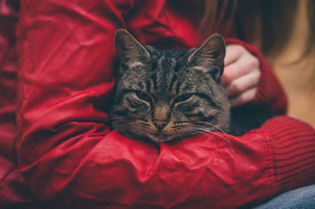 Gray Cat homeless and Woman hugging hands Lifestyle and Friendship help concept Stock Photo