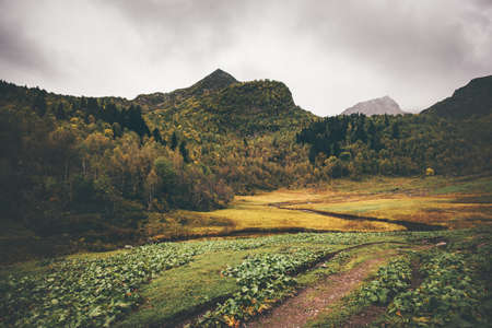 Mountains and autumn Forest Landscape Travel serene scenic view moody weather