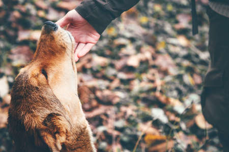 アウトドア ・ ライフ スタイルとの友情の概念に触れて幸せな犬と女の手