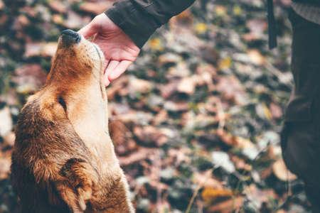 행복 한 강아지와 여자 손 터치 아웃 도어 라이프 스타일과 우정 개념