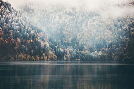 epic: Foggy Coniferous Forest and lake wild landscape Travel serene scenic view