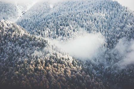 Forêt d'hiver nuages ??Paysage Vue aérienne arbres fond Voyage paysage serein