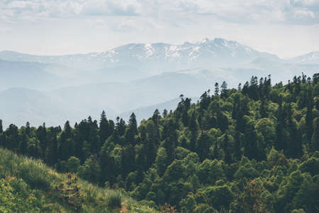 Conifères Forêt et montagnes Paysage Voyage saison estivale paysage serein