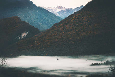 Mountains forest foggy Landscape with bird flying morning time Travel view serene scenery wild nature calm atmospheric scene Stockfoto