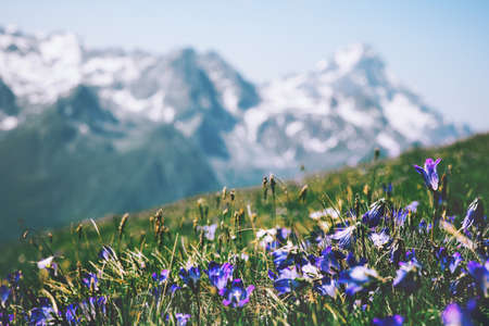 Bluebells flowers and mountains on background landscape summer travel scenic view wild nature Banque d'images