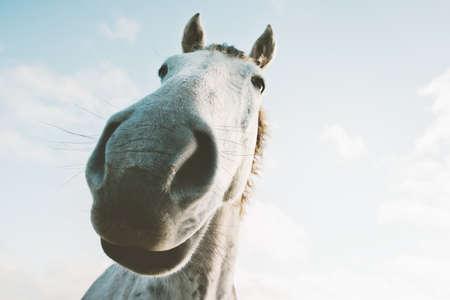 白い馬の肖像画 selfie 面白いペット クローズ アップ テーマの野性動物 写真素材