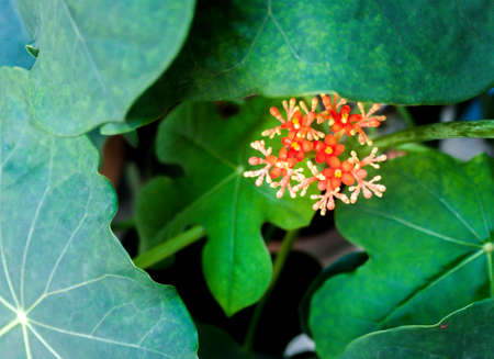 petite fleurs: Red orange small flowers in the pot. Banque d'images