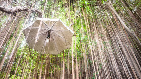 ivy hanging: Lighting hanging with umbrella among natural decoration of ivy