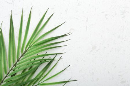 Tropical green leaves on white quartz countertop background with copy space, flat lay