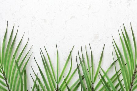 Palm leaves on white quartz countertop background with copy space, flat lay