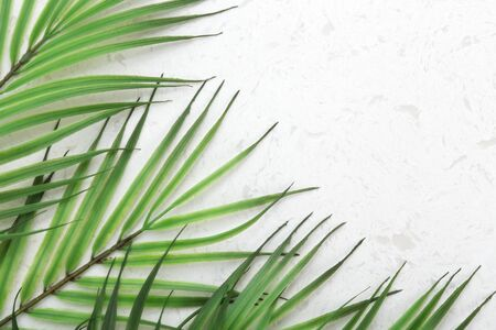 Green palm leaves on white quartz countertop background with copy space, flat lay Stock Photo