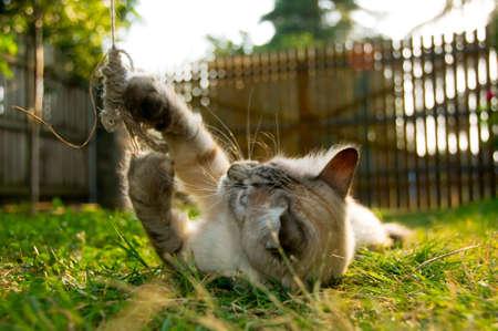 gato jugando: Gatito jugando en la hierba (profundidad de campo)