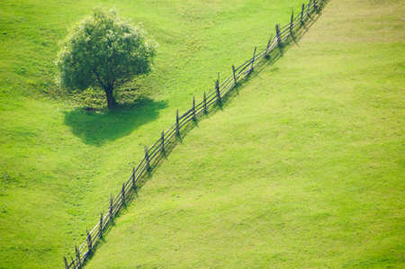 Open grass fields with a fence and a tree photo