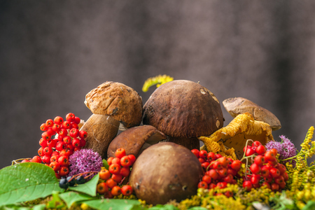 A beautiful still-life from natural large white mushrooms, orange leaves of mountain ash, green leaves, and other gifts of the forest.