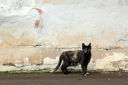 A black thin cat with spots stands on the background of an old shabby wall on the street and looks into the camera. The concept of a stray animal cat.