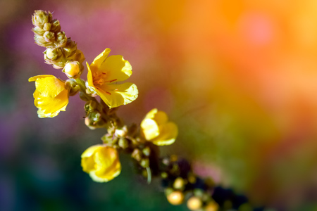 Close-up of a  yellow small flowers on a warm sunny day, blured background. Stock Photo