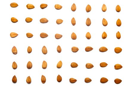 A collection of Apricot stone lie in horizontal rows on an isolated white background. with clipping path.  Apricot stone pattern