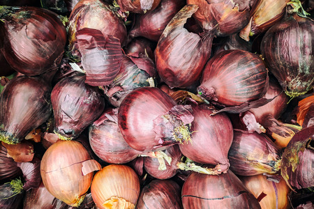 Purple onion background. Fresh onion  variety grown in the shop. Purple onion for salad, entree and soup
