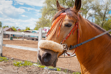 Horse outdoor shot. Beautiful horse outside the stable. Riding western purebreed horse. Horse portrait in countryside