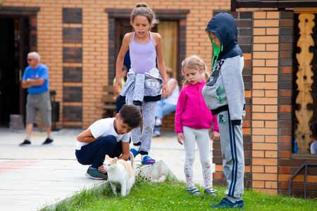 Altai, Russia – August 08, 2018:  a company of teenagers children walks and plays with a cat in an international summer camp in the Chemalsky district, Altai Territory Standard-Bild - 133072798