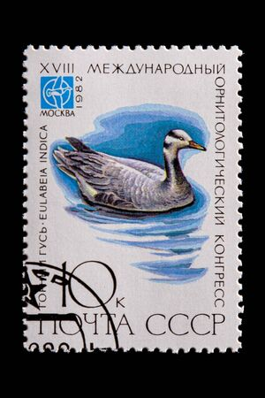 Novosibirsk, Russia - January 07, 2020: stamp bird collection printed in USSR  shows adult gray goose swims in a pond in the white background,  a postage stamp circa 1982